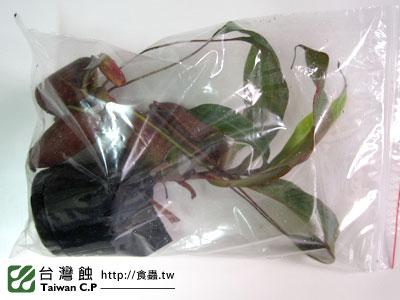 台灣蝕-1213-出貨品管-2.jpg