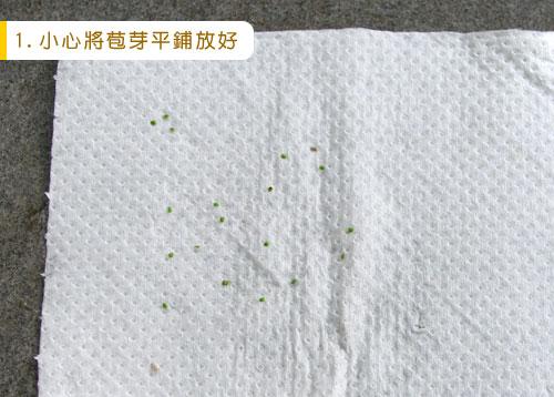 台灣蝕-苞芽出貨包裝流程-1.jpg