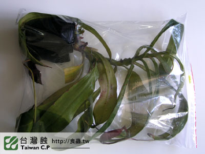 台灣蝕-0206-李小弟出貨品管-1.jpg