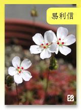 台灣蝕-易利信毛氈苔-首頁預覽.jpg