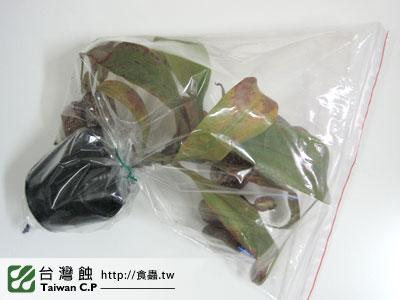 台灣蝕-0110-出貨品管-2.jpg