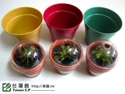 台灣蝕-1105-出貨品管-1.jpg