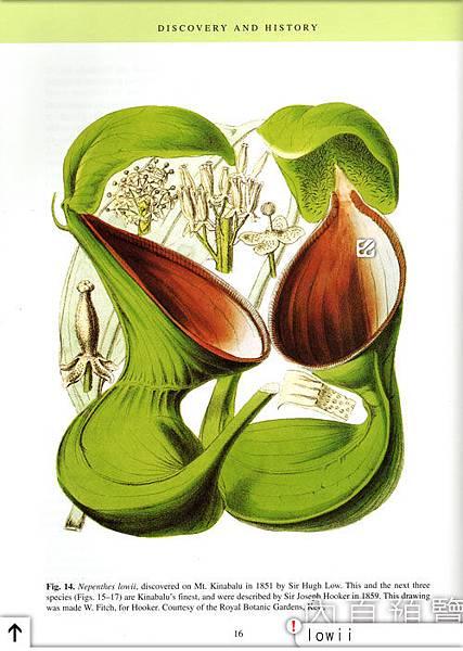 台灣蝕-食蟲書籍-Pitcher-Plants-of-Borneo-內頁預覽_05.jpg