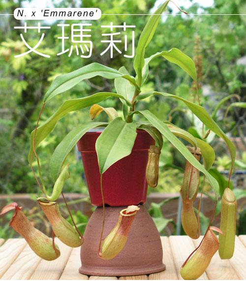 台灣蝕-艾瑪莉_01.jpg