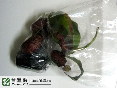 台灣蝕-1210-出貨品管-1.jpg