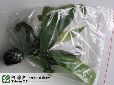 台灣蝕-0208-吳先生出貨品管-1.jpg