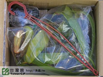 台灣蝕-100922-出貨品管.jpg