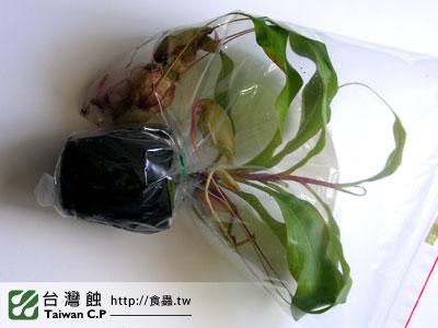 台灣蝕-0206-鄭先生出貨品管-1.jpg