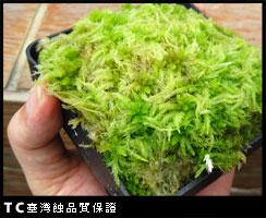 臺灣蝕-鮮活水苔