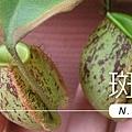 台灣蝕-留言抽蘋果小豬-獎品.jpg