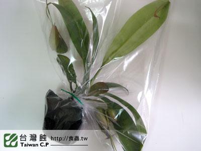 台灣蝕-1102-出貨品管-3.jpg