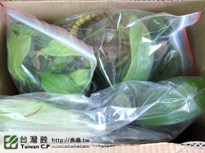 台灣蝕-1102-出貨品管-1.jpg