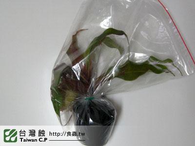 台灣蝕-1116-出貨品管-1.jpg