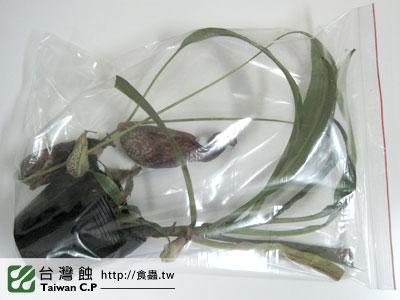 台灣蝕-0110-出貨品管-1.jpg