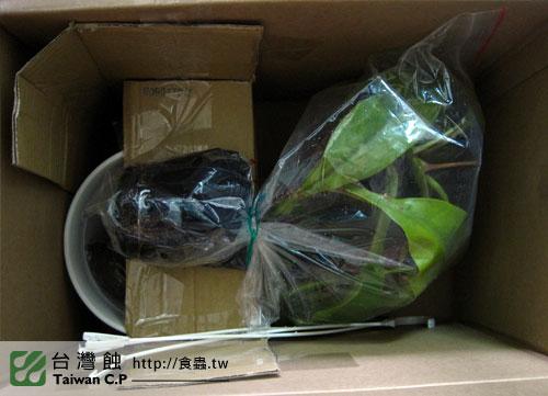 2010-09-20-鄭先生-豬籠草出貨.jpg