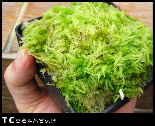 鮮活水苔-1.jpg