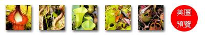 台灣蝕-食蟲書籍-Pitcher Plants of Borneo-預覽