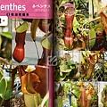 台灣蝕-食蟲書籍-食蟲植物養育的方法_03.jpg