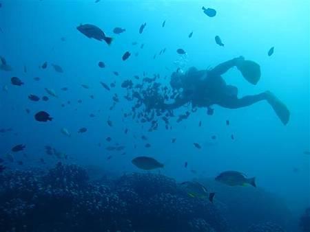 餵魚區體驗-4.JPG