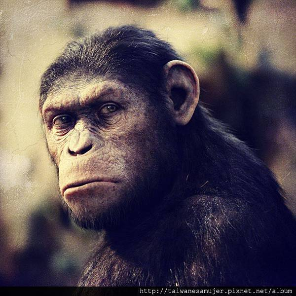 dawn_of_the_planet_of_the_apes-01