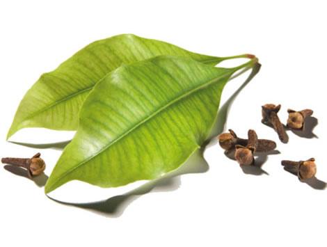 herb_cloves_leaf__65159.1393873734.1280.1280