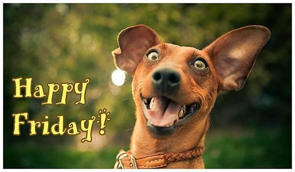 happy-friday-dog