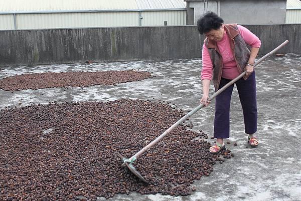 茶樹6.JPG