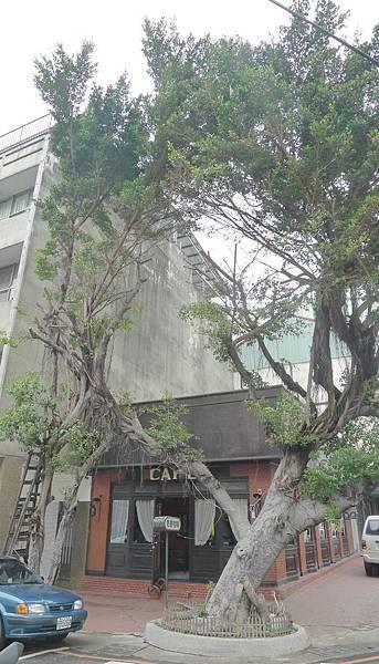 400台中市中區平等街35號:老樹咖啡 (1)
