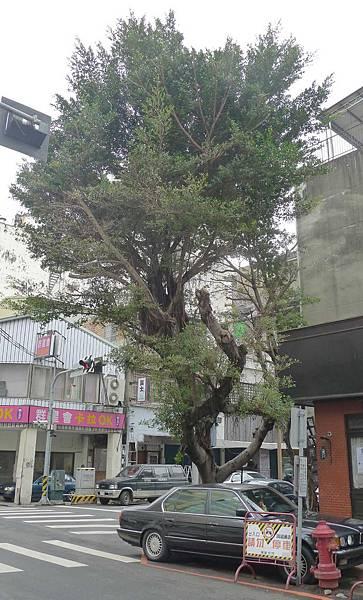 400台中市中區平等街35號:老樹咖啡 (3)