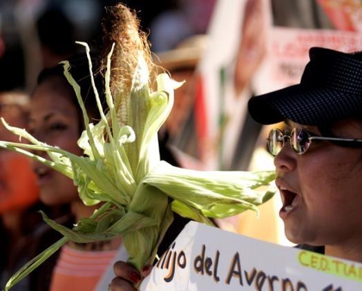 墨西哥餅抗議1.jpg
