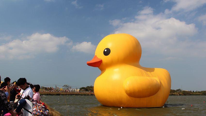 黃色小鴨1