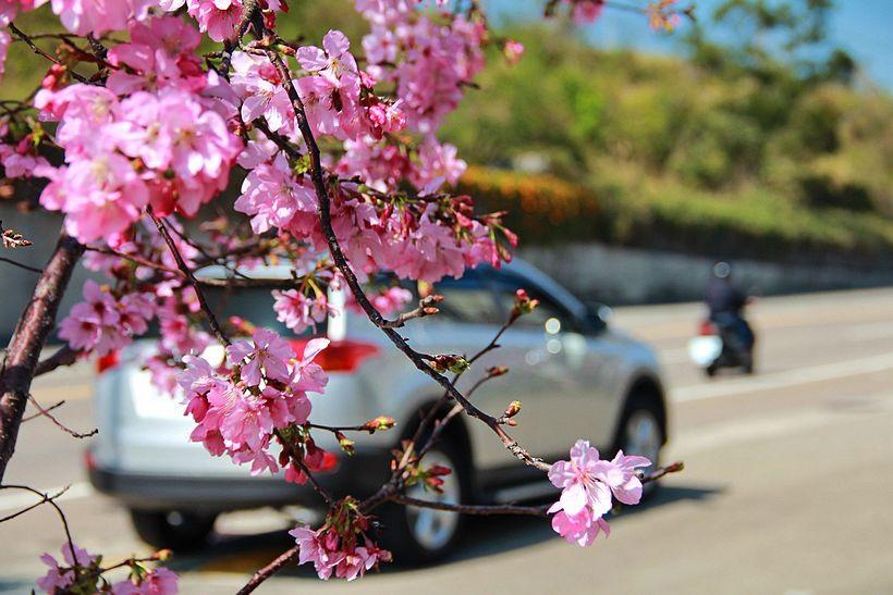 櫻花 - 2
