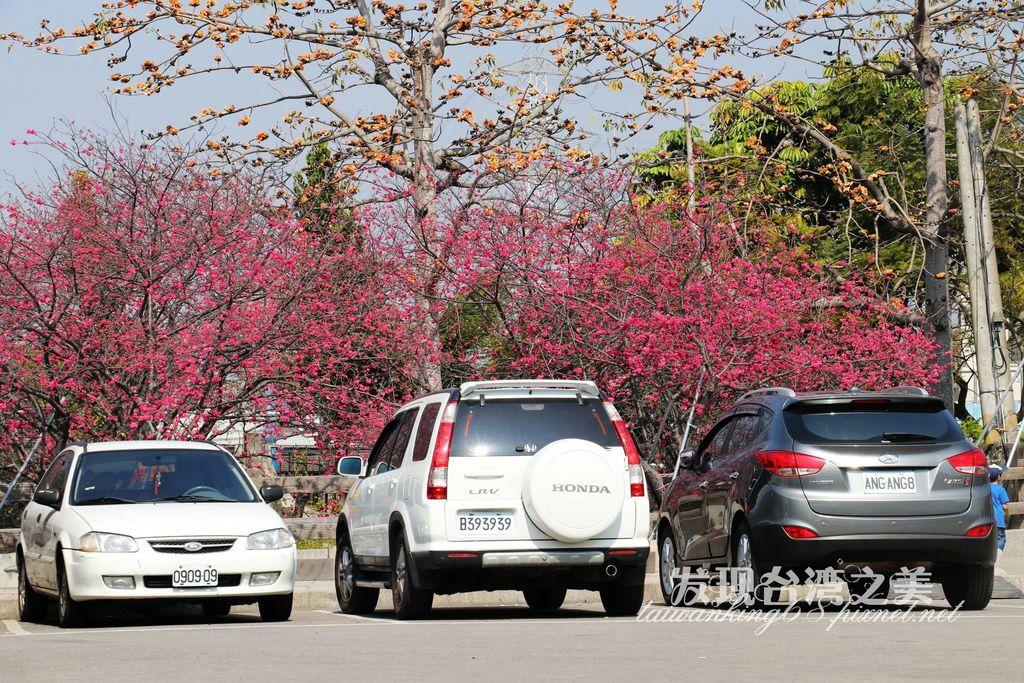 2020后里泰安派出所櫻花祭