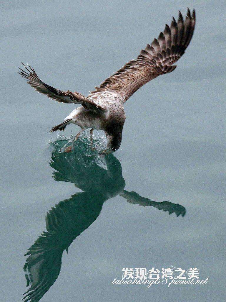 海鷗_2020022902