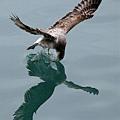 海鷗_202002295981