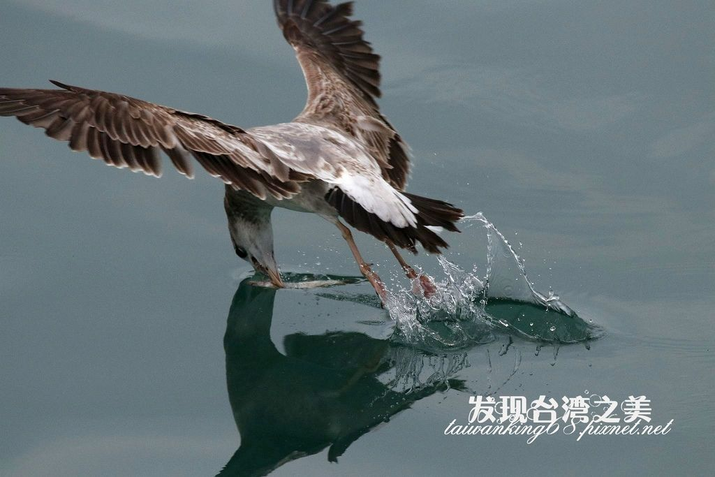 海鷗_2020022904