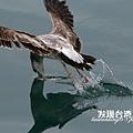 海鷗_202002296001