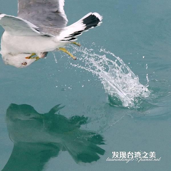海鷗_202002296110