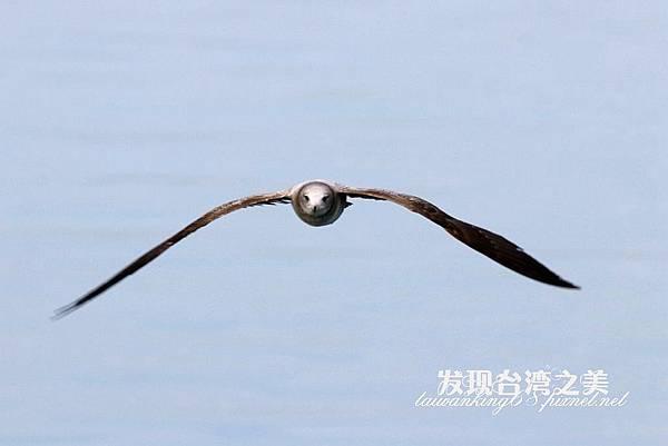 海鷗_202002296142
