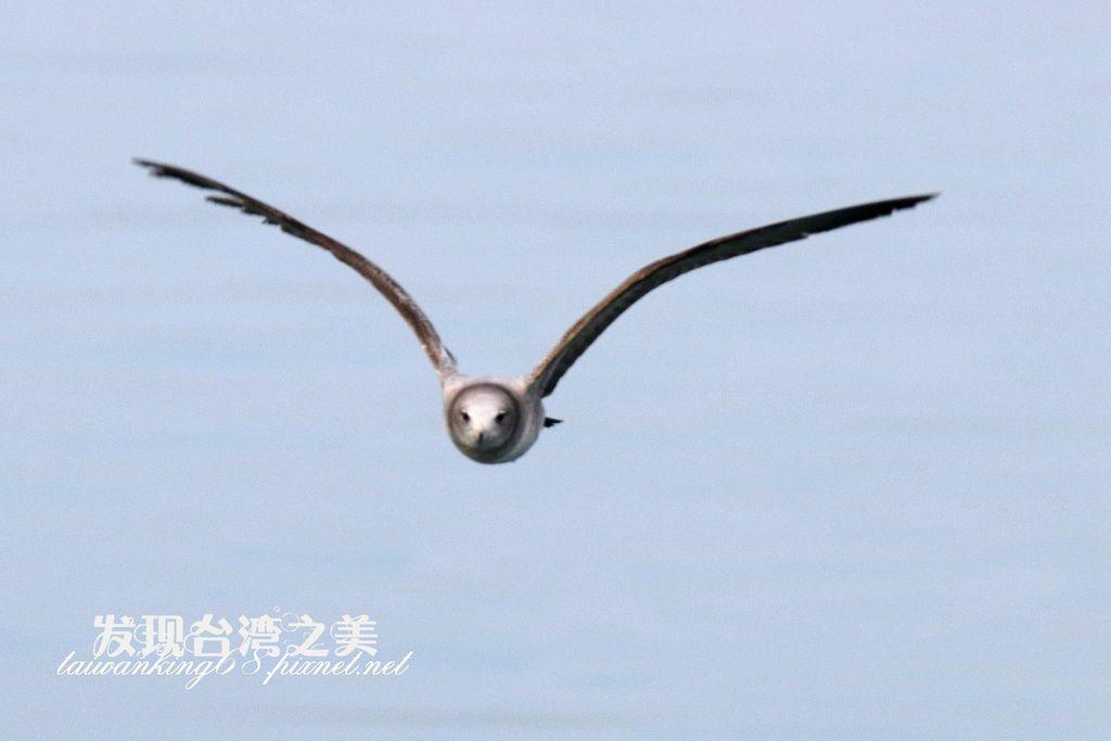 海鷗_2020022907