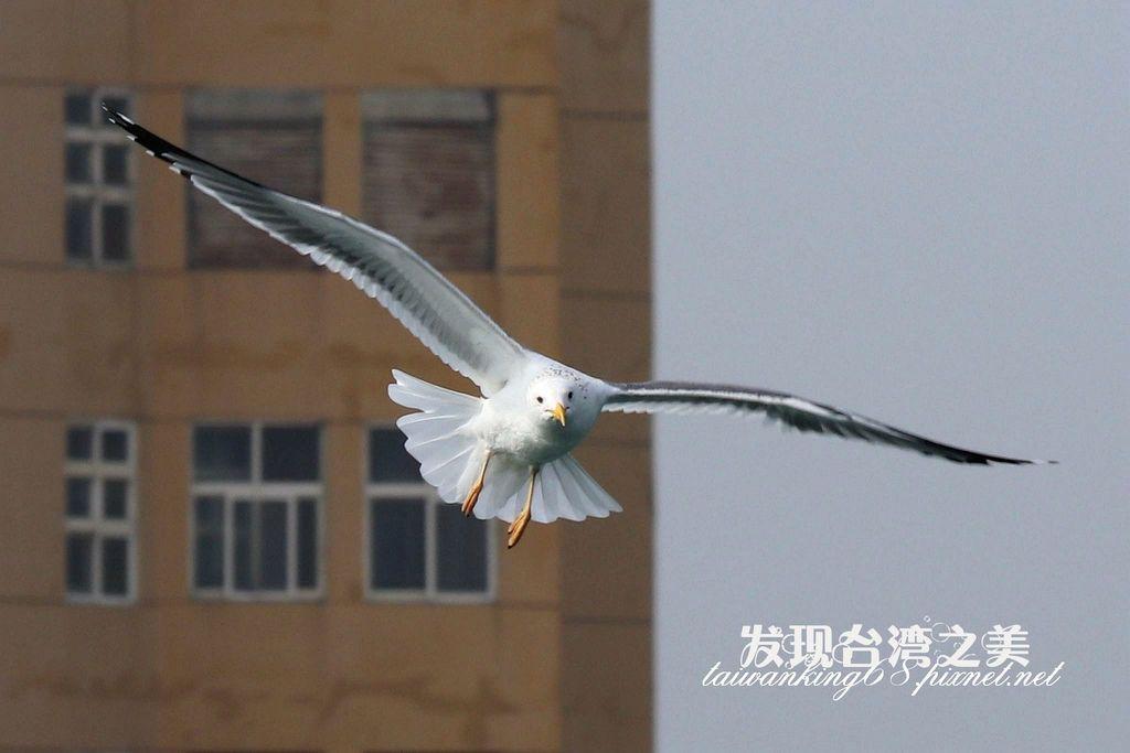 海鷗_2020022908