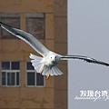 海鷗_202002296420
