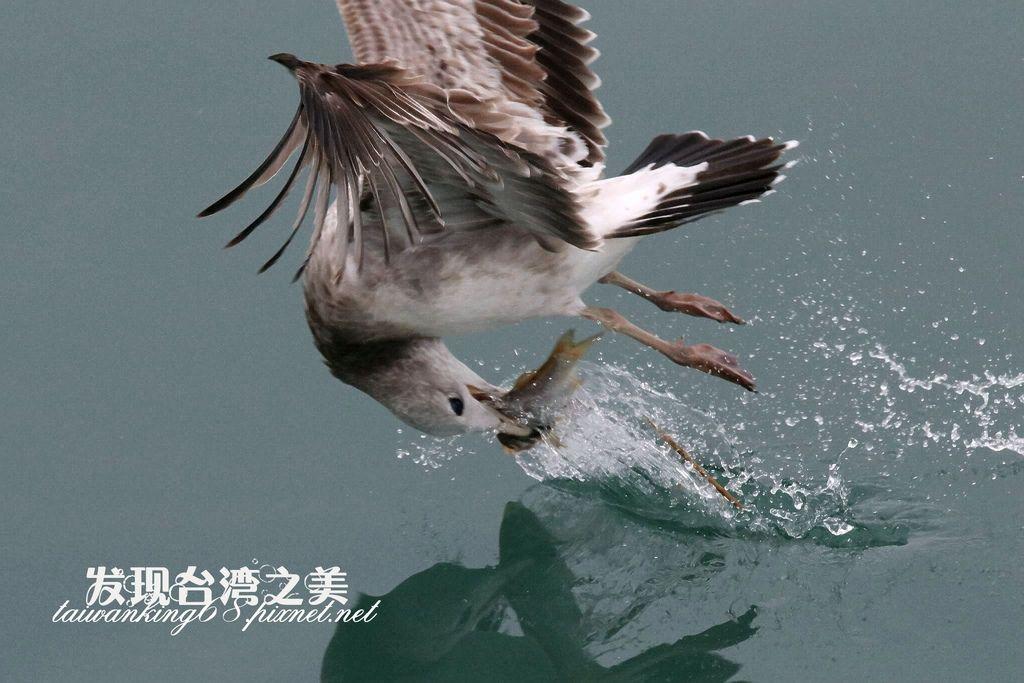 海鷗_20200229503