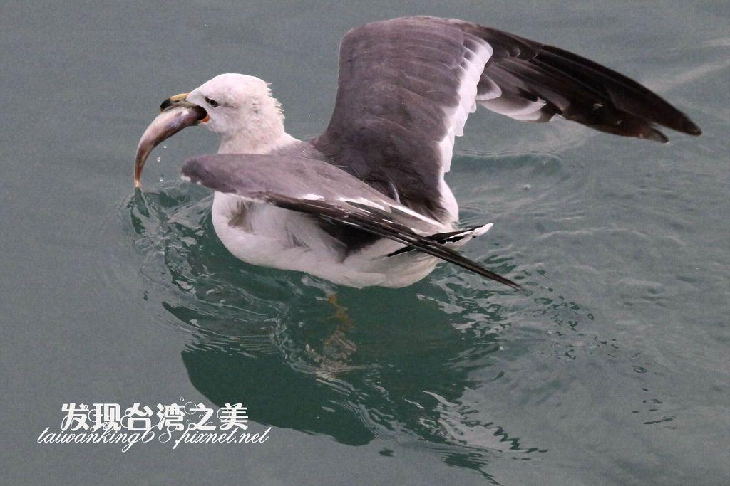海鷗_2020022905