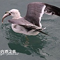 海鷗_202002295900
