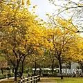 台中部子公園_202003036892