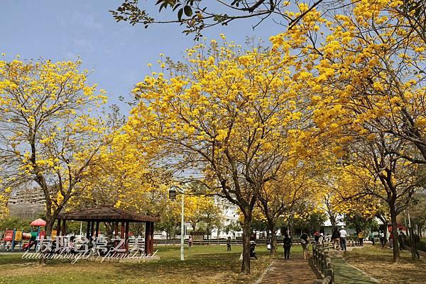 台中部子公園_202003036908