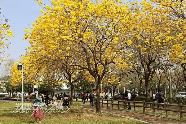 台中部子公園_202003036912