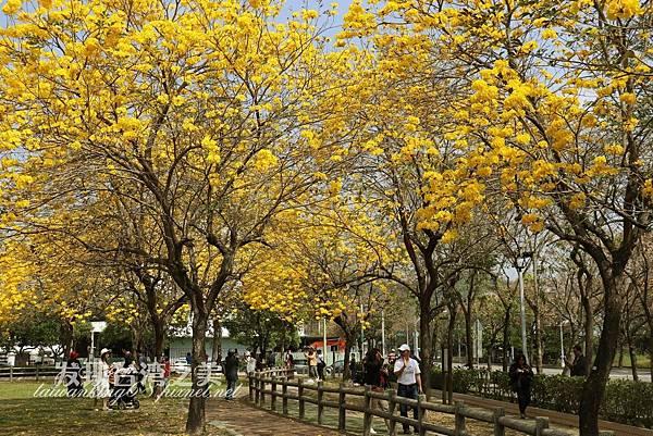 台中部子公園_202003036913