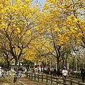 台中部子公園_202003036914